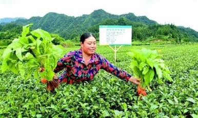 """益海嘉里:""""吃干榨盡""""每粒稻谷,循環模式護生態"""