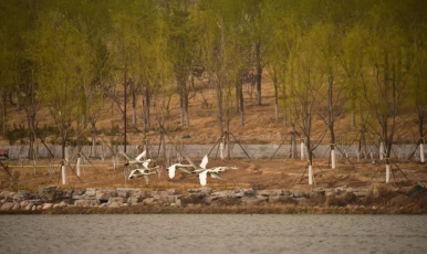 生態環境越變越好 北京亦莊成珍稀鳥禽樂園