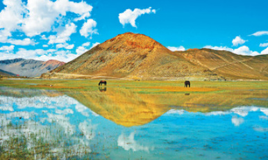 西藏定结湿地 水如镜鹤翩跹