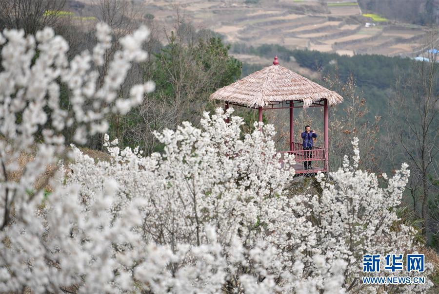 (新华全媒头条·图文互动)(6)奔向新的幸福——陕西贫困县全部摘帽的N个截面